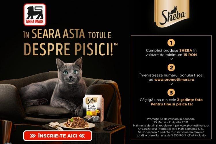 Mega Image - In seara asta totul este despre pisici - Castiga o sedinta foto pentru tine si pisica ta!